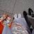【七五三の親の服装】和洋のおすすめコーデ集★定番から妊婦さん向けまでテーマ別に検索!